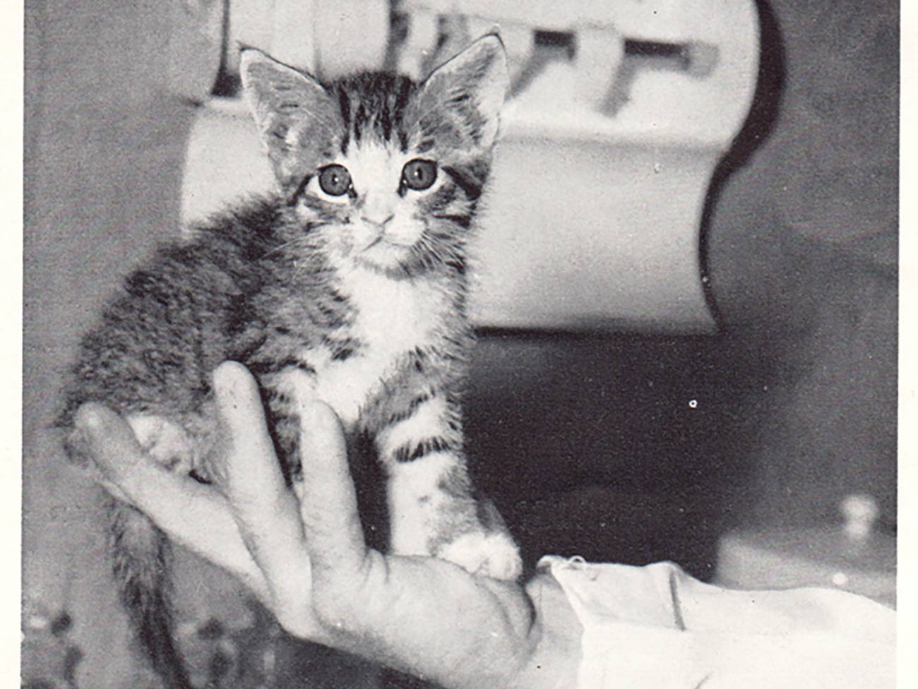 black and white photo of a small kitten being held in the palm of a man's hand