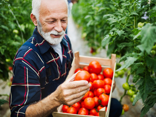 Man holding wooden box full of tomatoes in one hand and single tomato with other hand