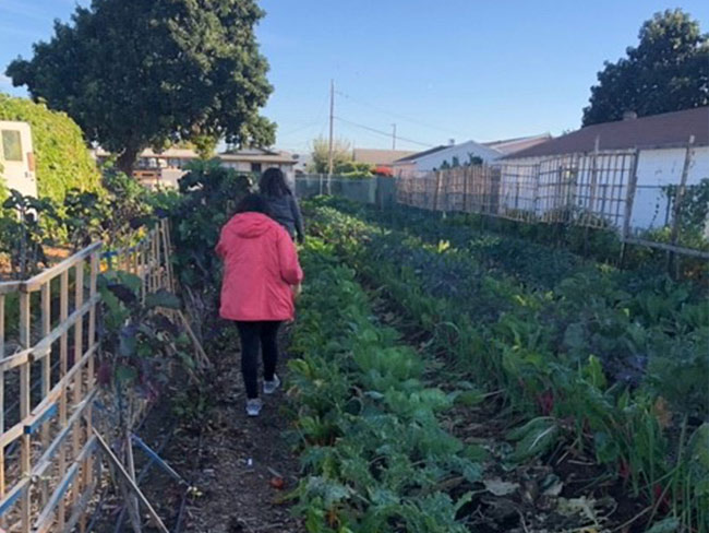 2 women walking through a vegetable garden